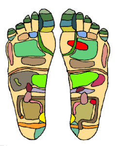 How does reflexology work?  Reflexology is based on the principle that the entire body is represented by reflex points on the hands and feet, each point corresponding to an individual part of the body.    All organs, nerves, glands and parts of the body are connected to the reflex points on the feet. The pressure techniques used by reflexologists, aim to stimulate the nerve endings in the feet and send signals along the nerve pathways through the central nervous system to the brain, to regulate and improve function of the vital organs.